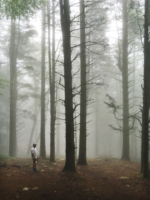 LaRhune-Forest-Fog
