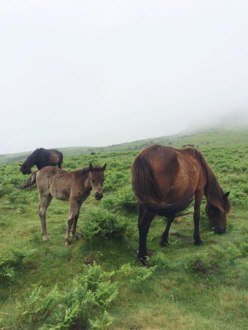 LaRhune-Horses